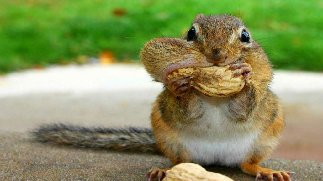 Why Squirrels Go Nuts Over Solar Panels And How You Can Stop Them Alder Energy Solar